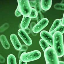 منابع آزمون کارشناسی ارشد باکتری شناسی دامپزشکی